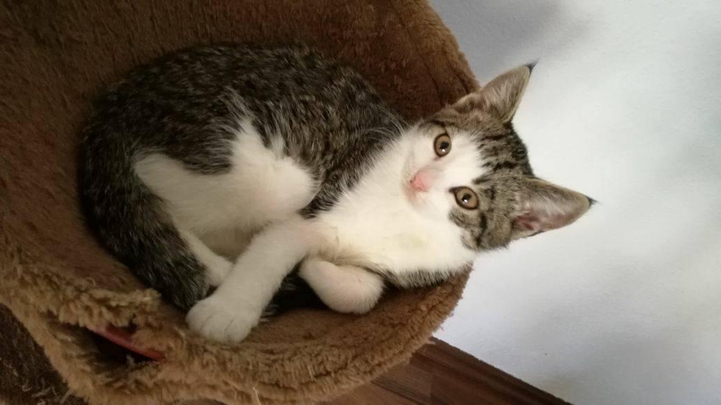 Talpa – junges Katzenmädel