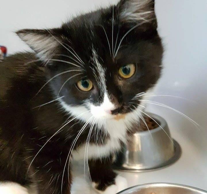 Katzenbub Morris – ein echter kleiner Kämpfer
