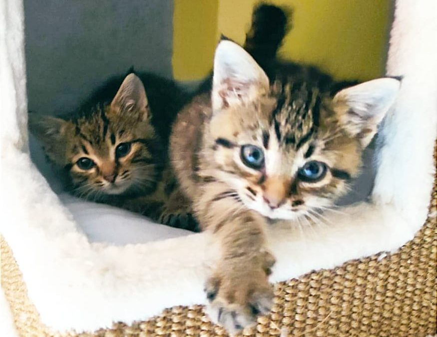 Leonie und Lilly – zwei zuckersüße Tigerles