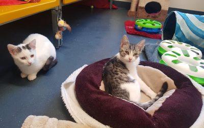 Magda und Trudi – zwei liebe Katzenkinder 🐾