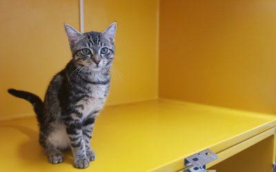 Katzenbub Motte – hübscher kleiner Tiger
