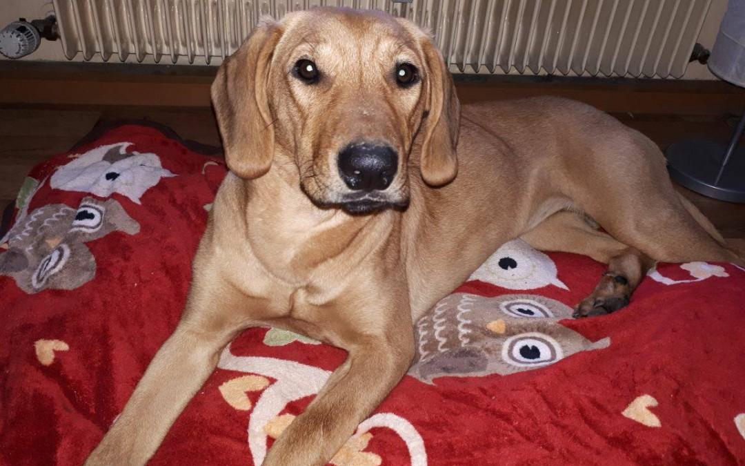 Hundemädel Luna – ein Goldschatz