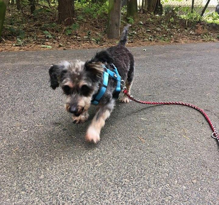 Hunde-Opa Cookie