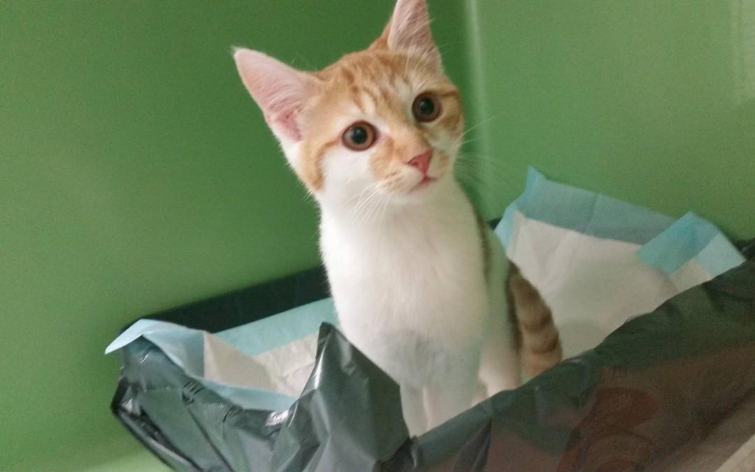 Katzenmädel Katalina