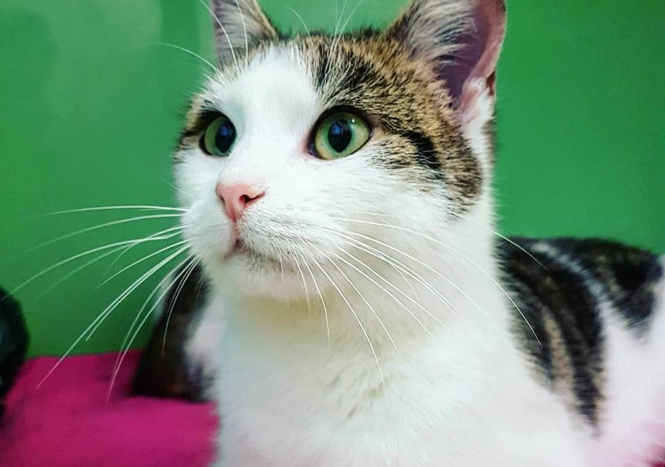 Katzenmädel Iris