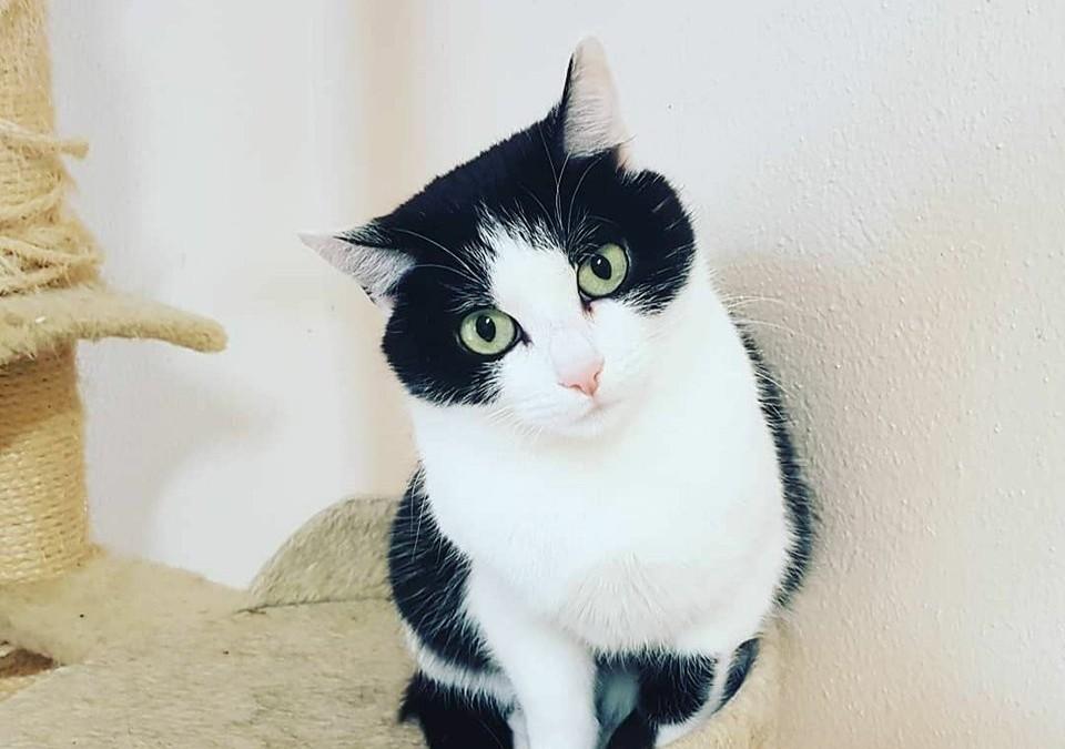 Katzenlady Murka, heisst jetzt Lilly