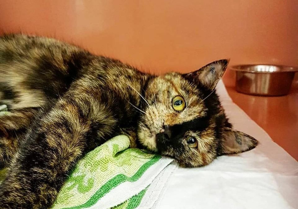 Katzenmädel Tina