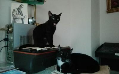 Max und Moritz – zwei freche Katzenbuben