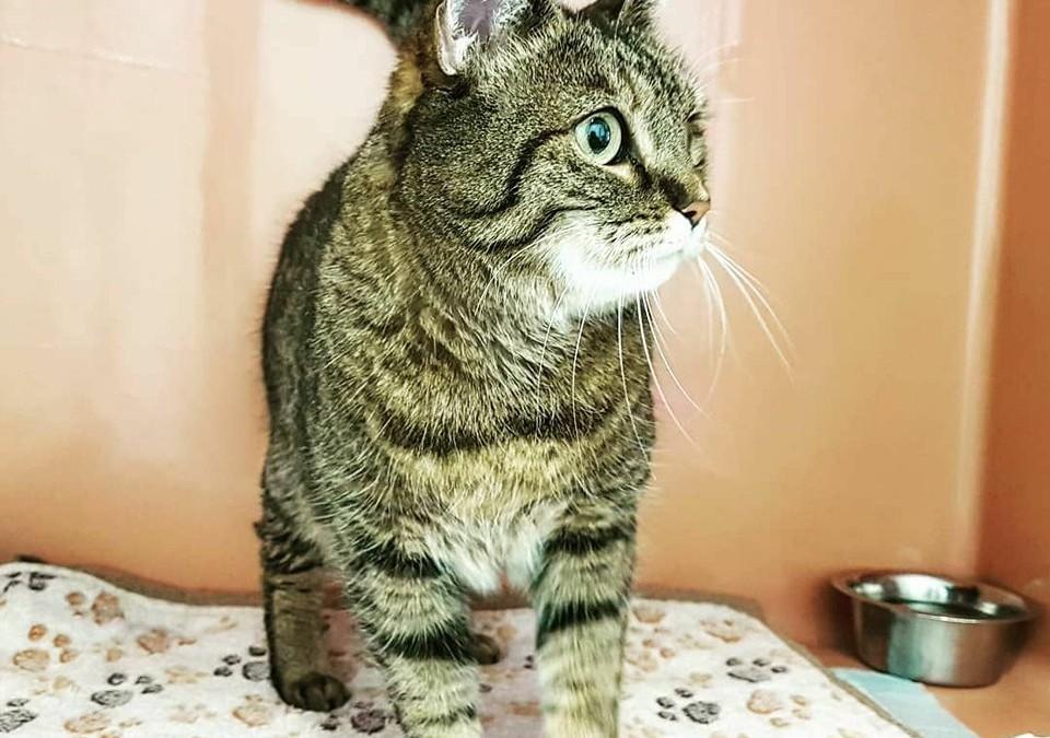 Katzenlady Izzy