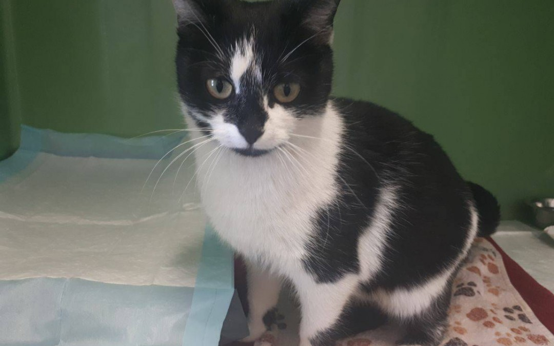 Cora – hübsches Katzenmädel