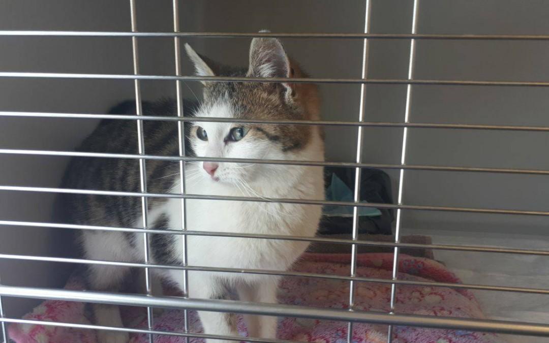 Moni – süßes, freches Katzenmädel
