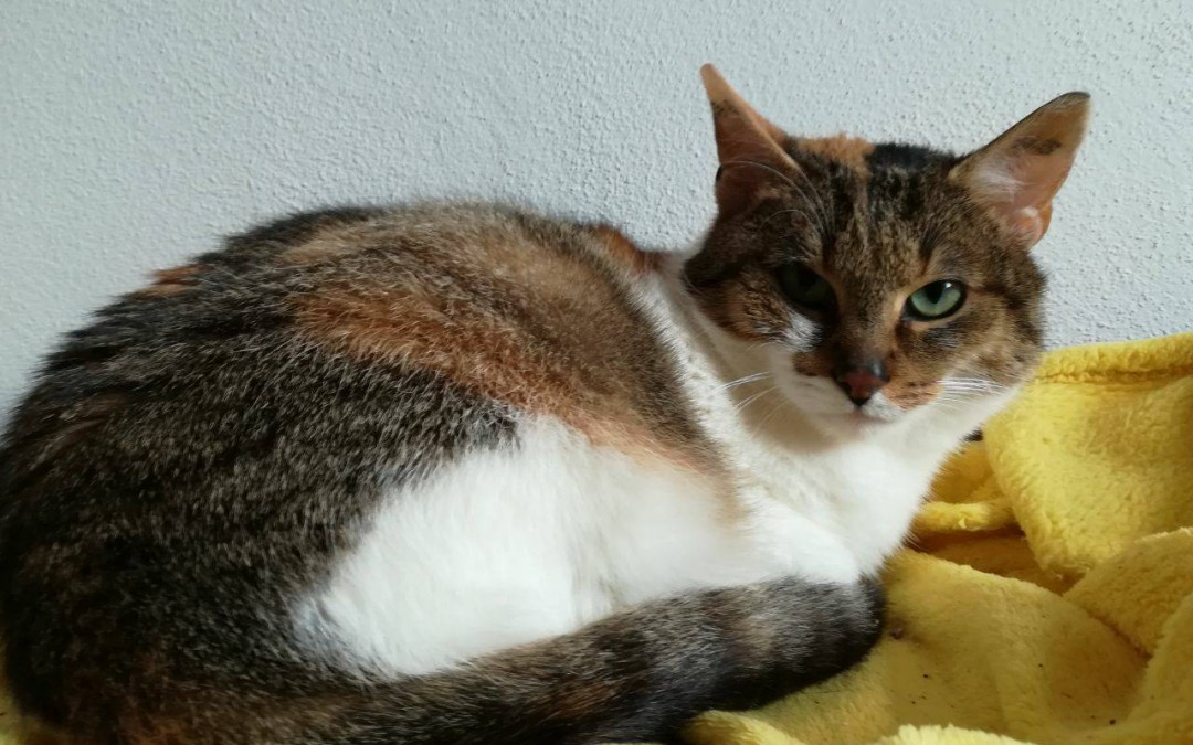 Elli Katze sucht liebe Familie