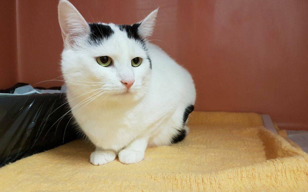 Katzenlady Cleo