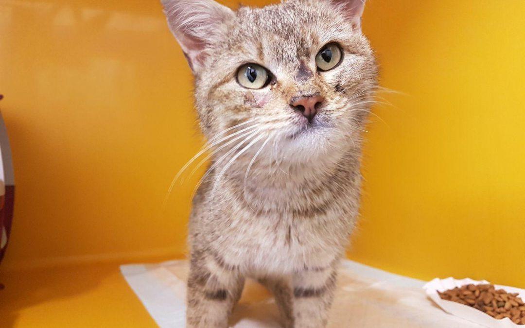 Meggy – liebe kleine Katzenlady