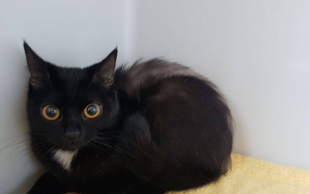 Pixie – freche kleine Katzenlady