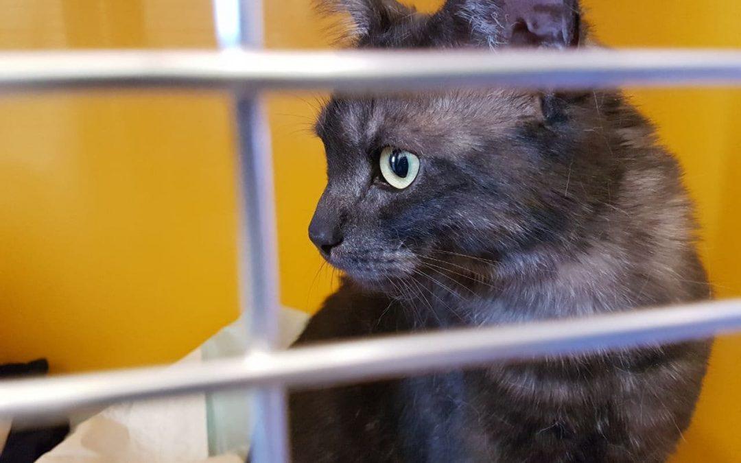Katzenmädel Mia – wow !