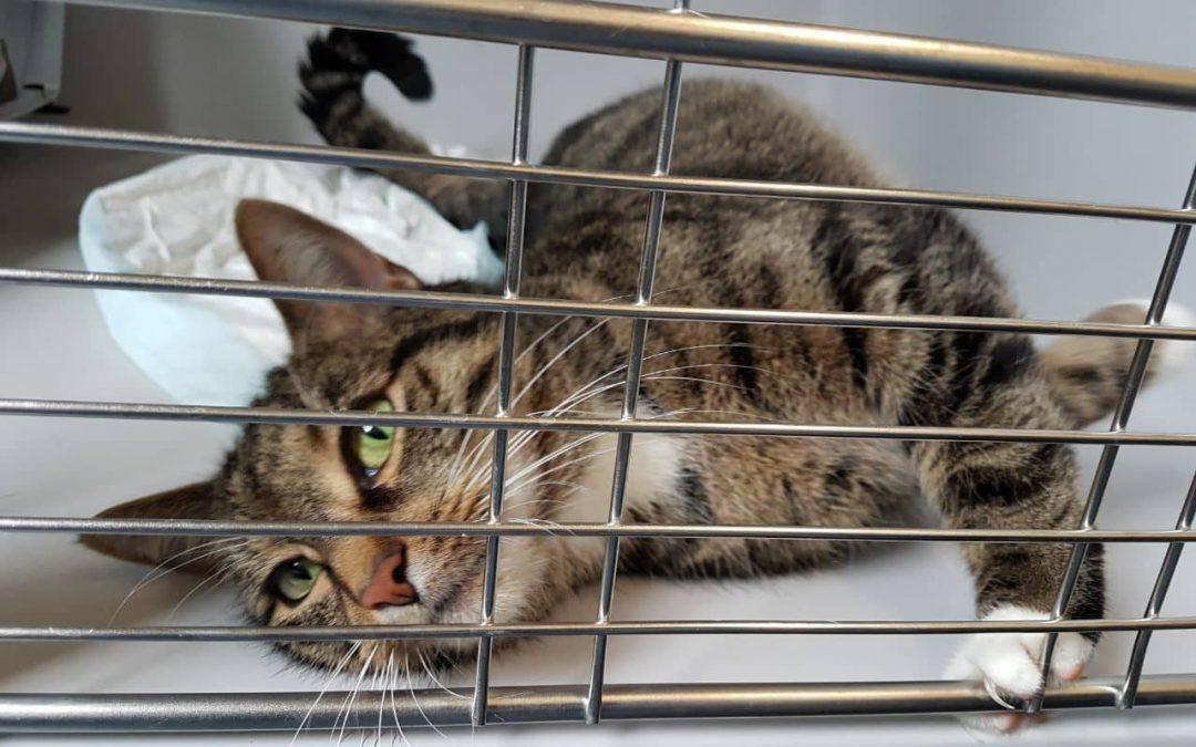 Katzenlady Lisa – eine Katze mit Charakter :+)