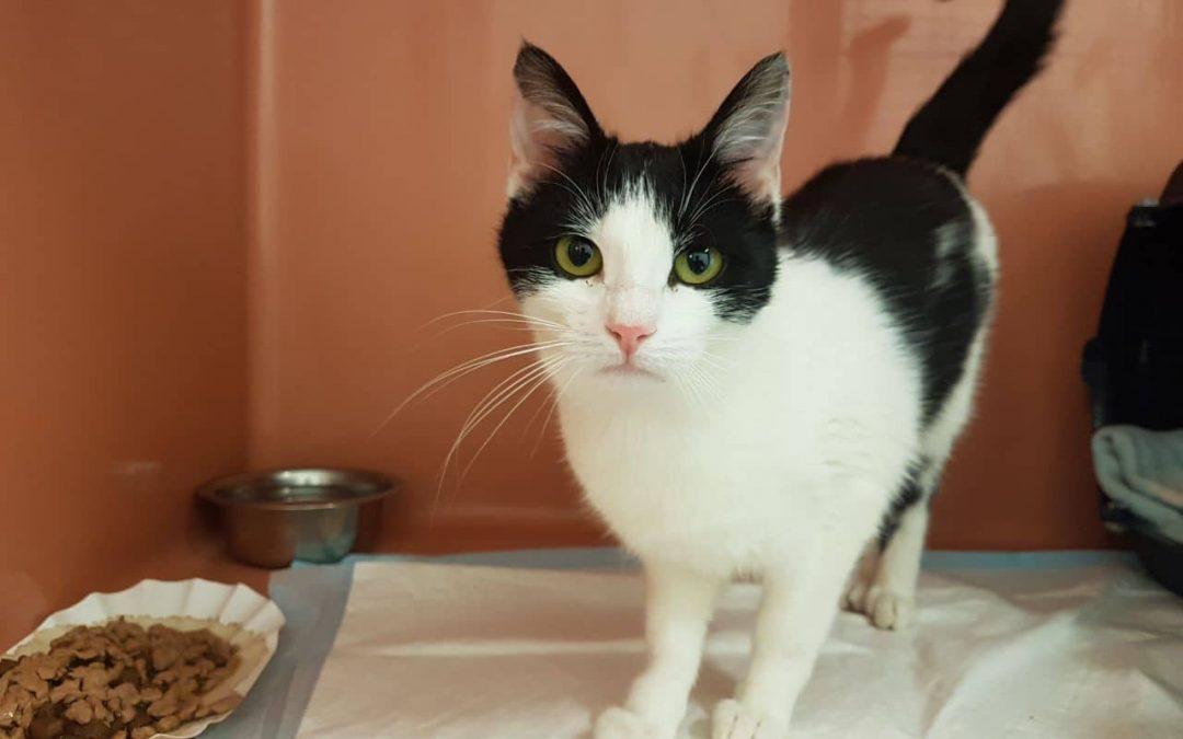 Katzenmädel Rosalie – bald nicht mehr alleine :+)