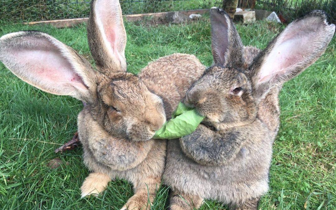 Viele Kaninchen warten bei uns im Tierheim auf ein artgerechtes Zuhause