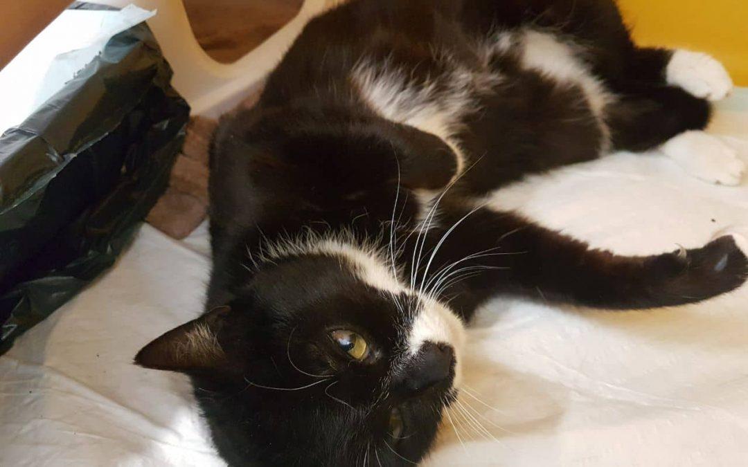 Dorothe – sehr liebe Katzenlady