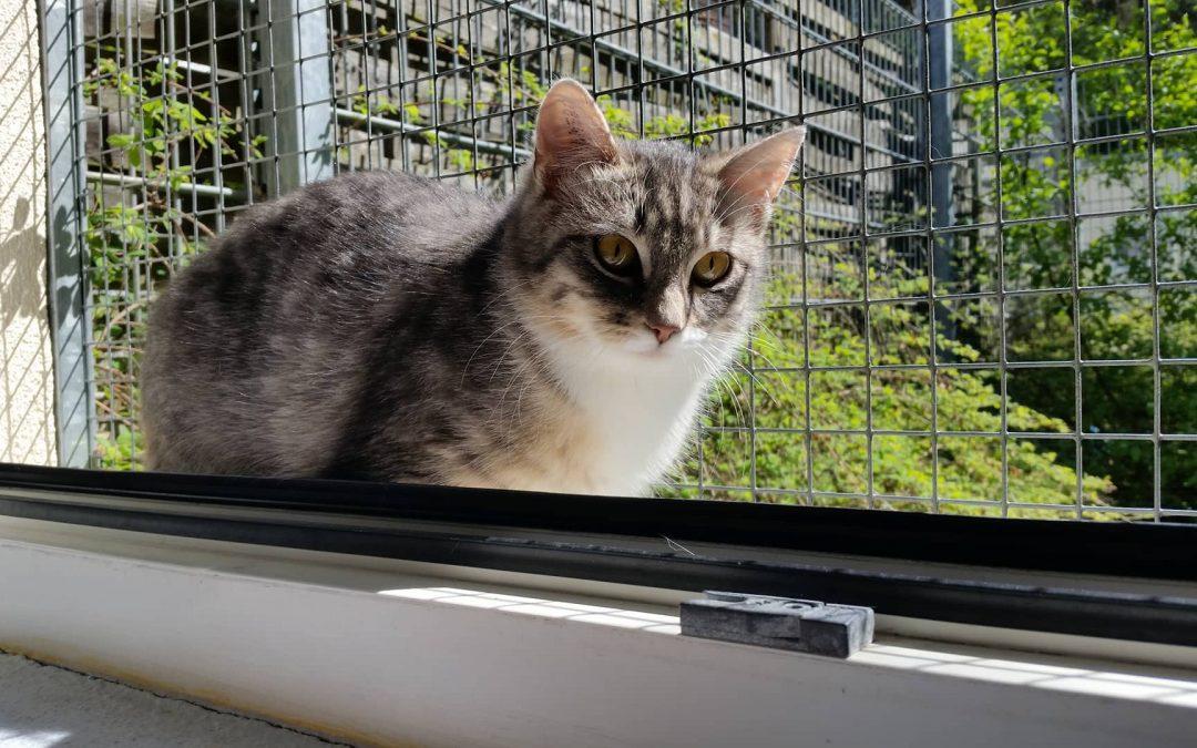 Katzenmädel Lena