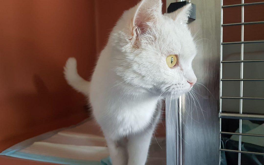 Katzenlady Piri – Frau Tollpatsch