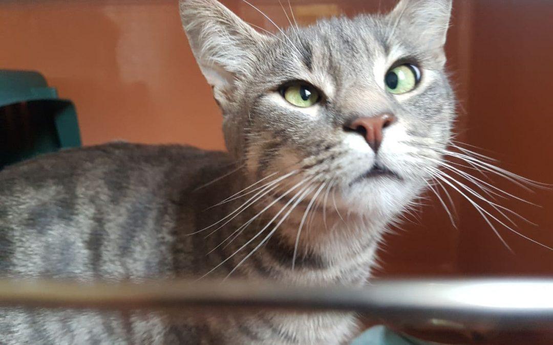 Katzenmädel Amber mit dem lustigen Blick :+)
