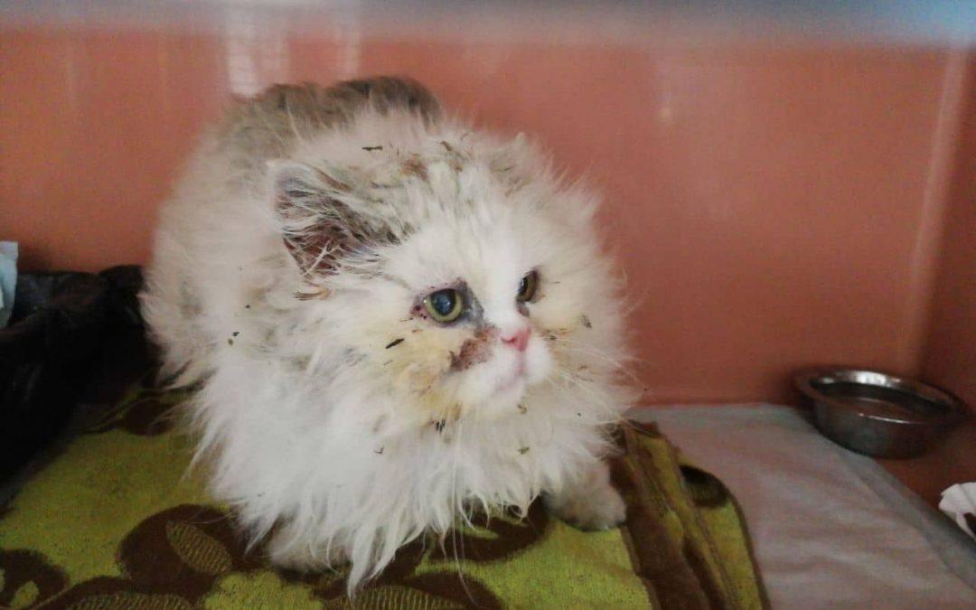 Lilly- arme kleine Fellnase
