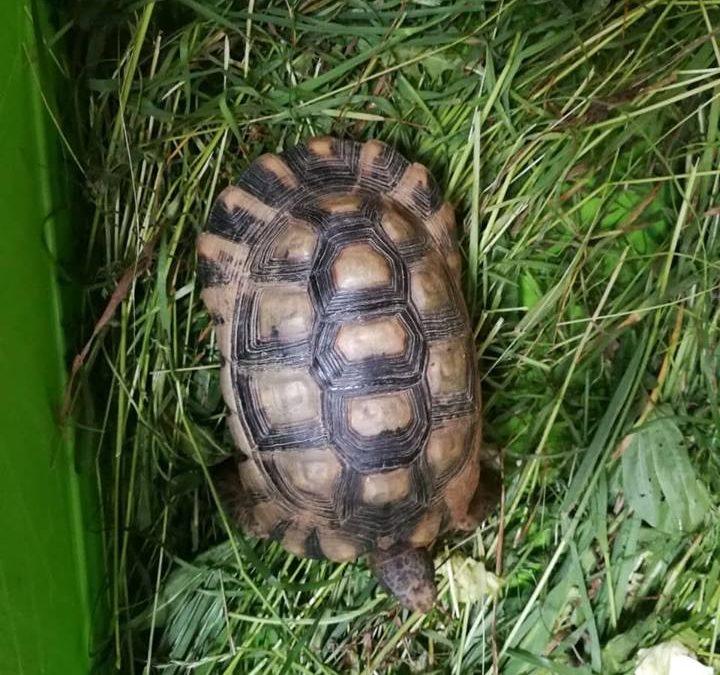 Schildkröte gefunden zwischen Wappersdorf u Thonhausen