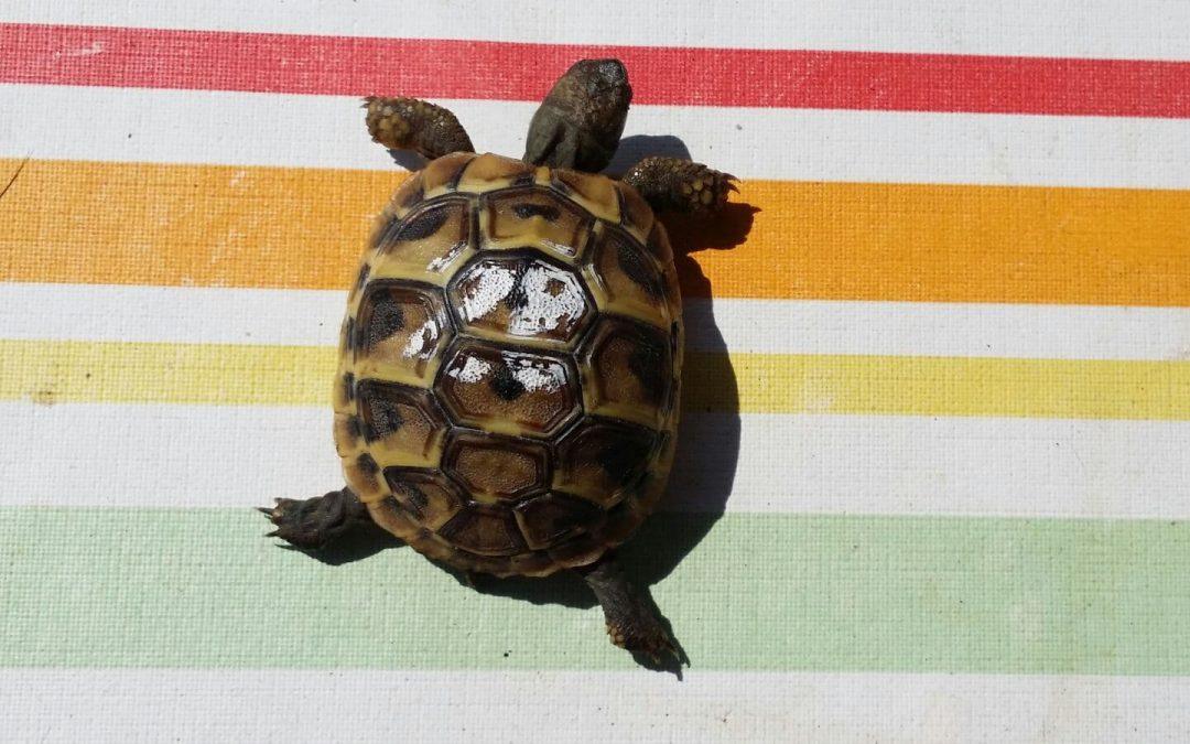 Schildkröte gefunden Amberg, Gustav-Adolf-Straße