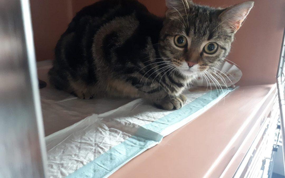 Olivia – wunderschönes Katzenmädel