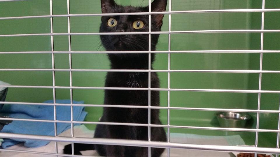 Cleo – junges Katzenmädel