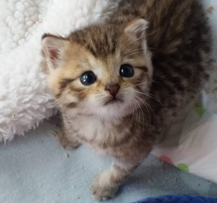 Katzenkind Henry
