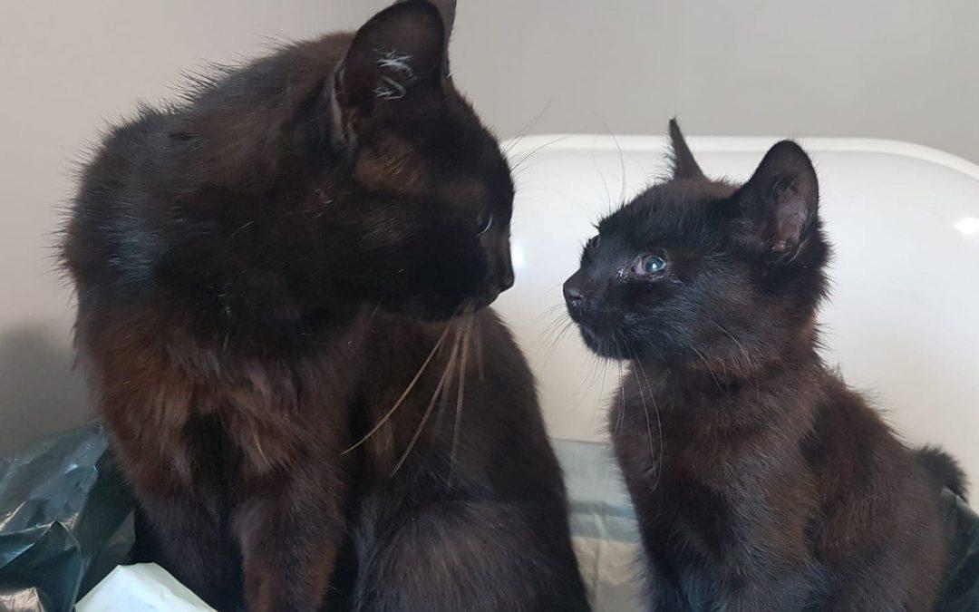 Katzenfamilie gefunden Köfering / Kümmersbruck