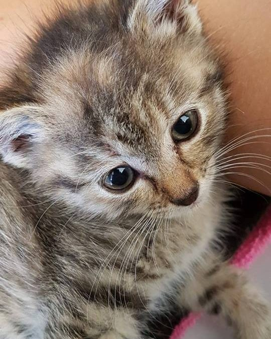 Alis- kleines Katzenmädel