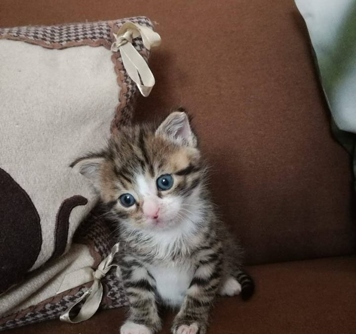 Katzenkind Felix