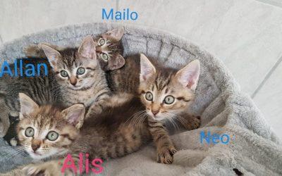 zwei kleine Kater – Allan und Mailo suchen liebe Familie