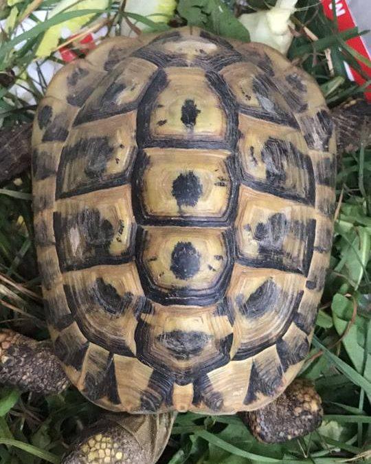 Fund-Schildkröte Kastl