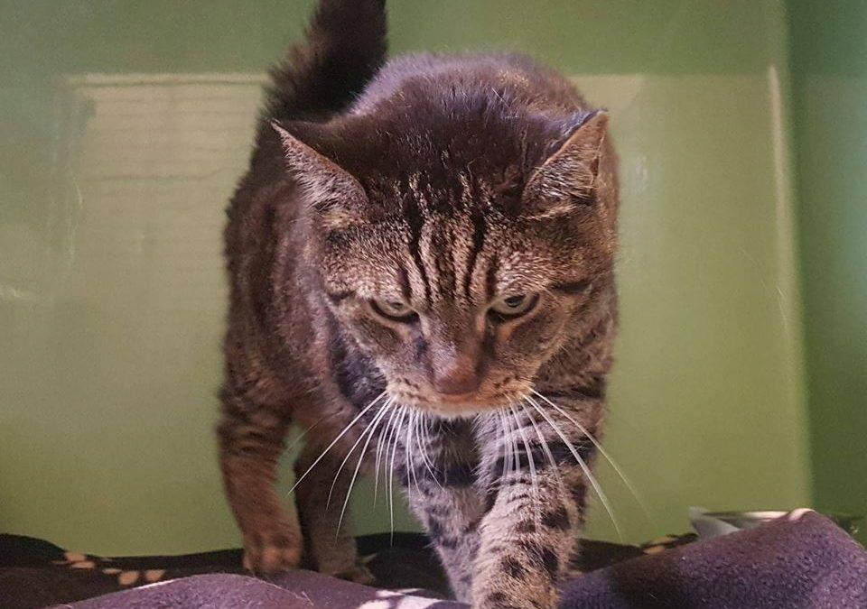 Manni – sehr rüstiger 14 jähriger Katzenopa