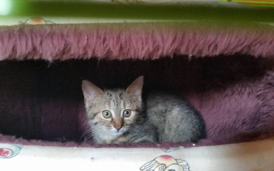 Katzenmädel Natascha