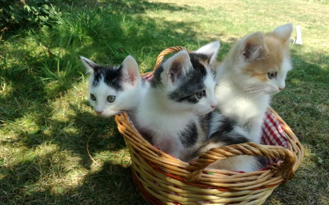 ein 'buntes' Katzenkörbchen :+)