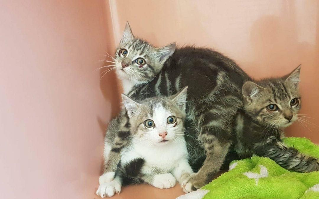 Drei Fundkatzenkinder Hirschbach / Riglashof