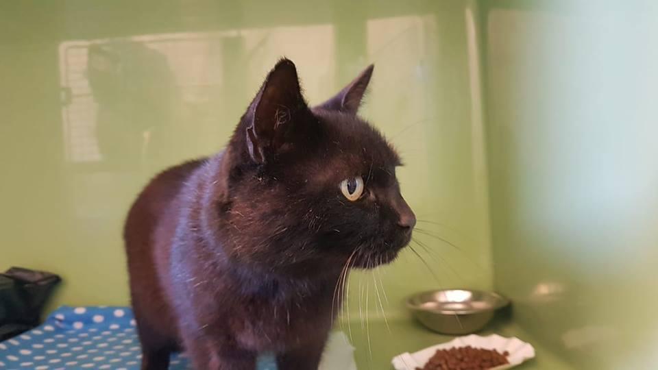 Ola – schwarze Katzenlady