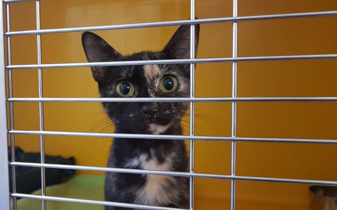 Trini – freches kleines Katzenmädel