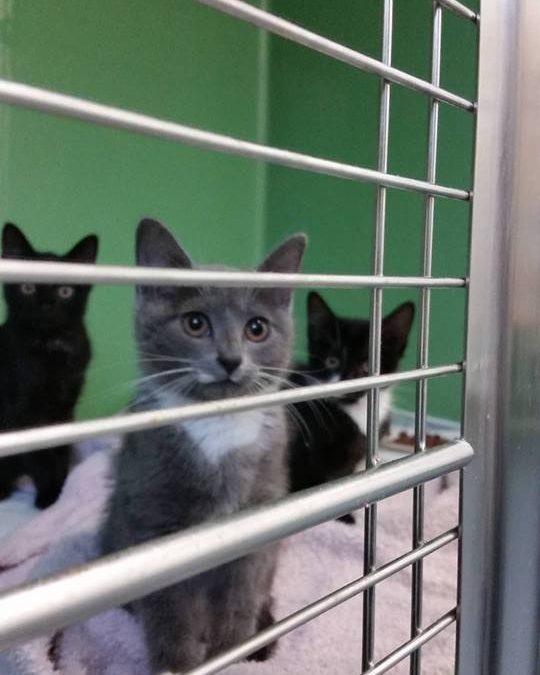 D Programm Amberg – 4 Katzenkinder und die Mama