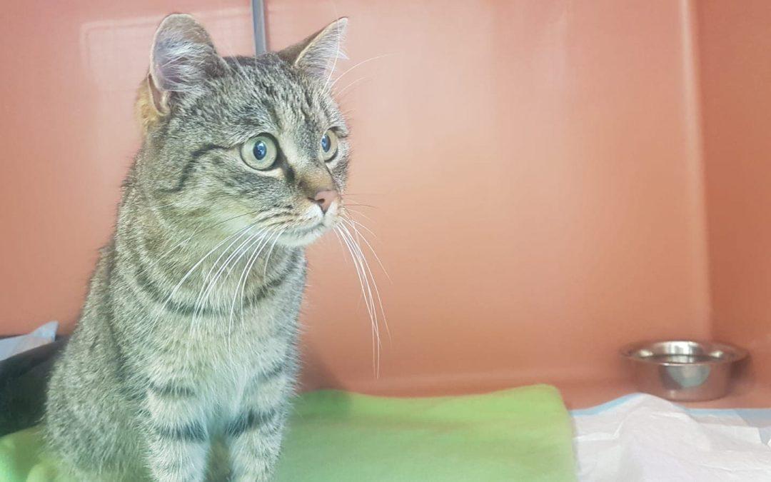 Lilly – Schmusekatze sucht neue Familie