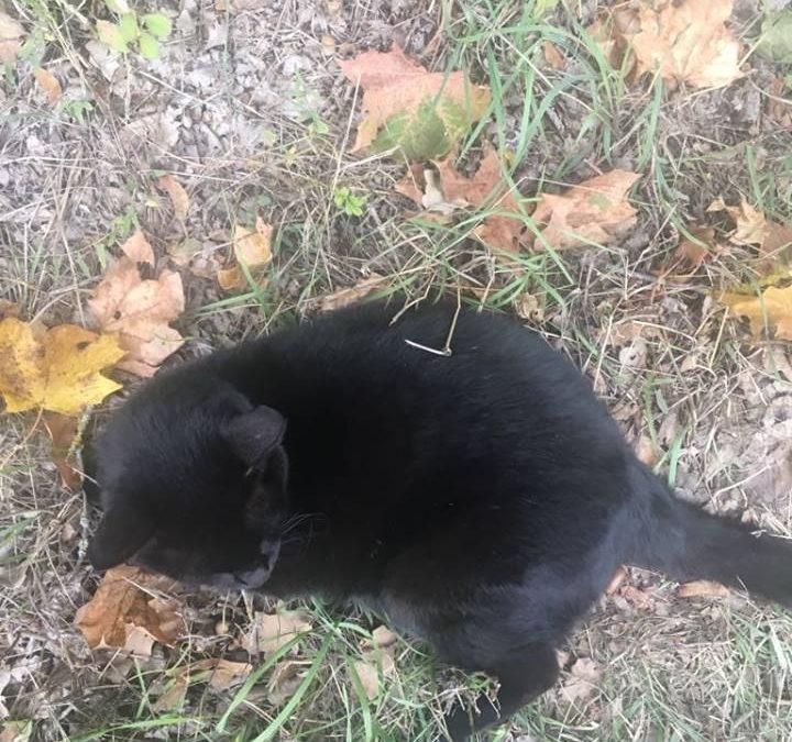 Katze Galaktika – eine Fellnase in Not !
