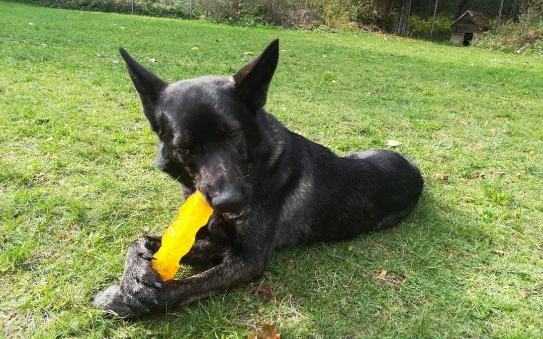 Jax – ein toller junger Hund