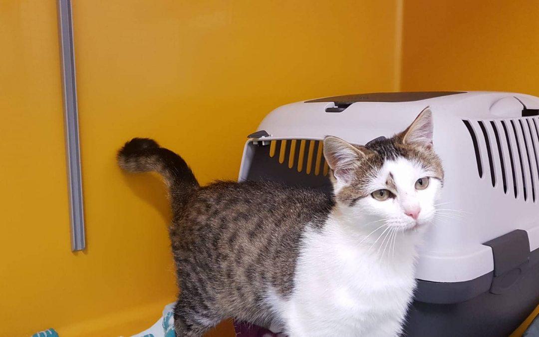 Katzenmädel Maxi aus dem Birgland und ihr bester Kumpel Felix