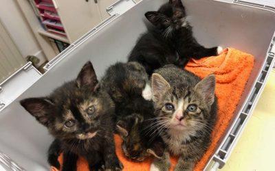 4 kleine Katzenkinder – 2 davon suchen noch eine liebe Familie